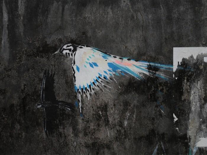 :bird:1